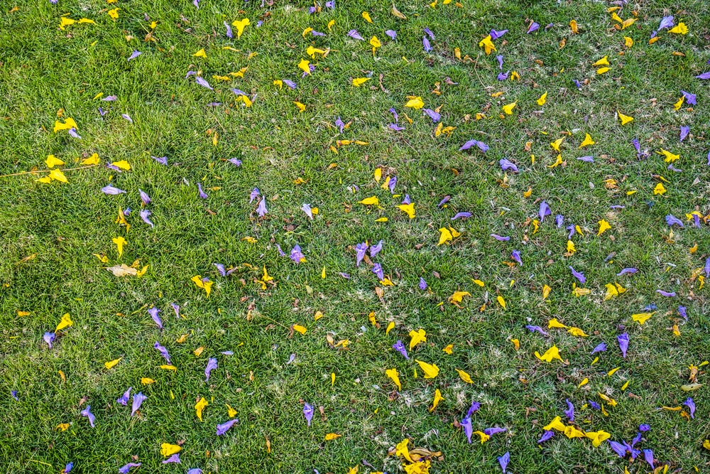 yellow and purple flower petals on green grass field