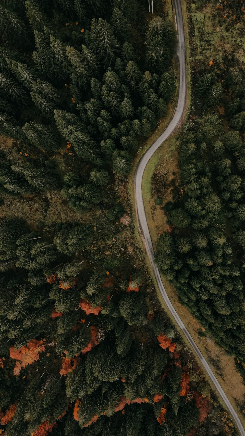 birds eye view of forest