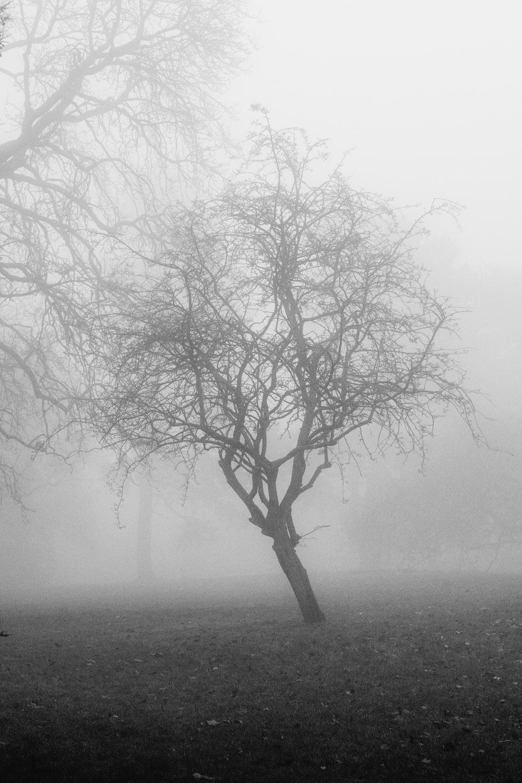 leafless tree on foggy weather