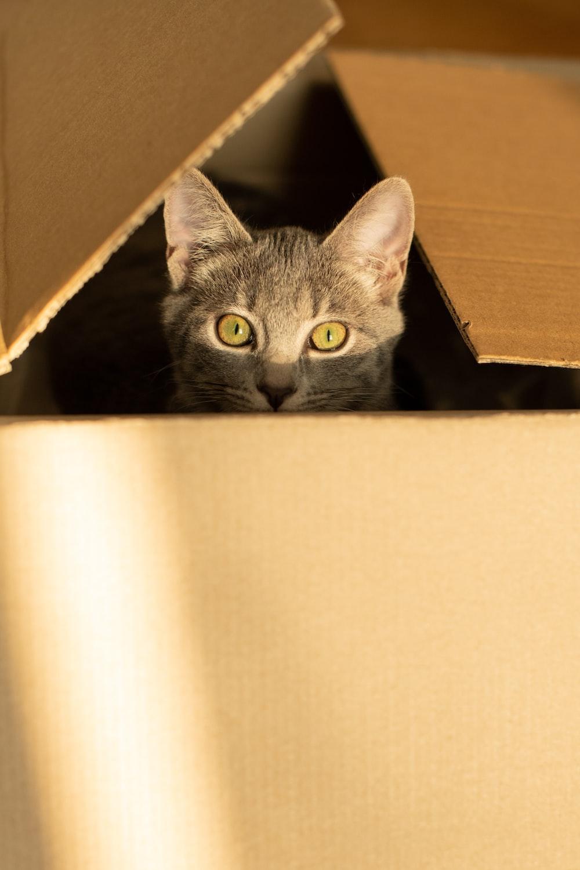 silver tabby cat in brown cardboard box