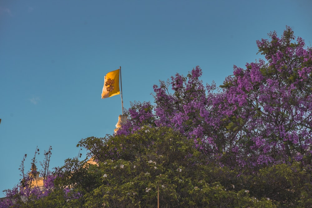 yellow flag on purple flower tree under blue sky during daytime