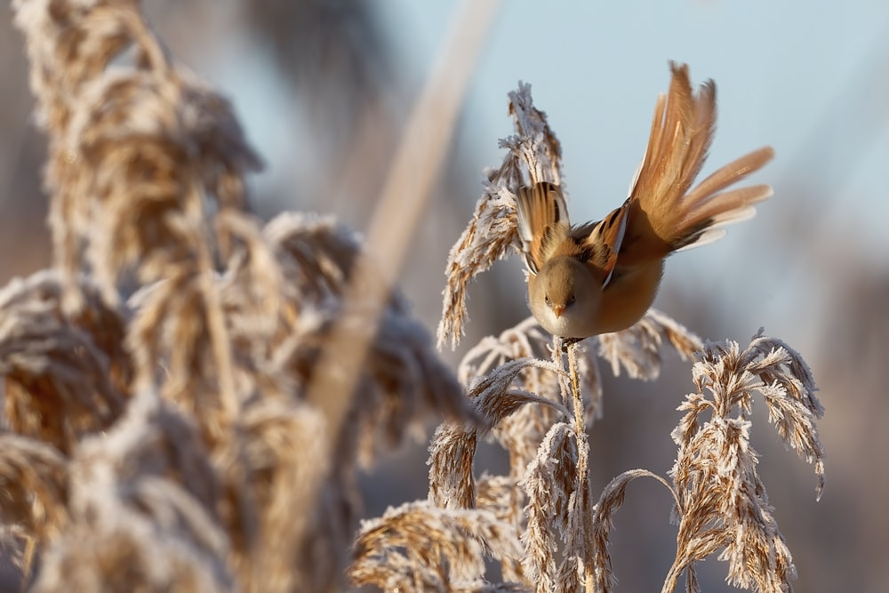 brown bird on brown wheat during daytime