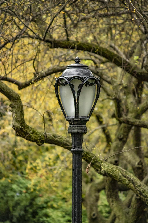 black street lamp near yellow leaf trees during daytime