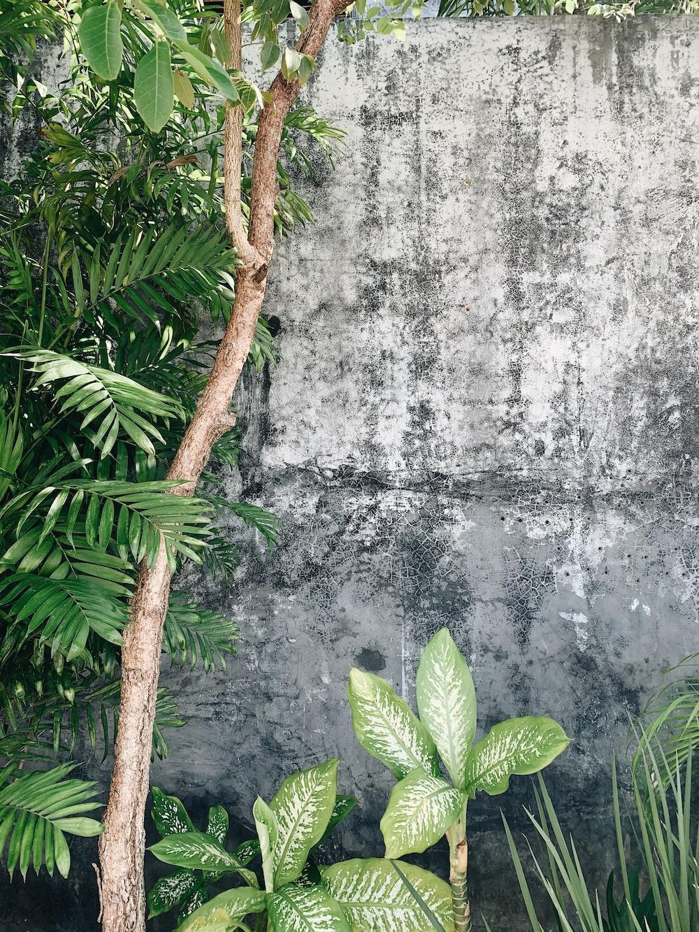 green leaf plant near gray concrete wall