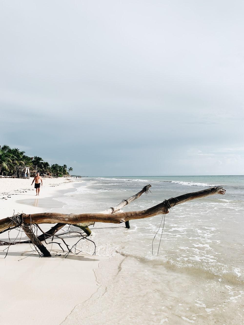 brown tree branch on white sand beach during daytime