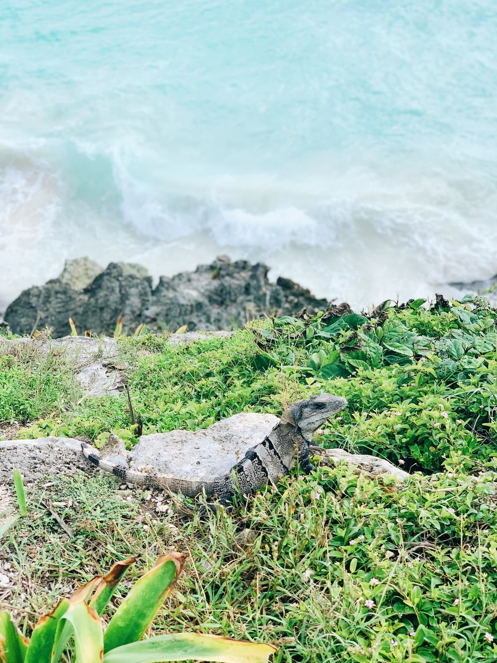 gray and black lizard on gray rock