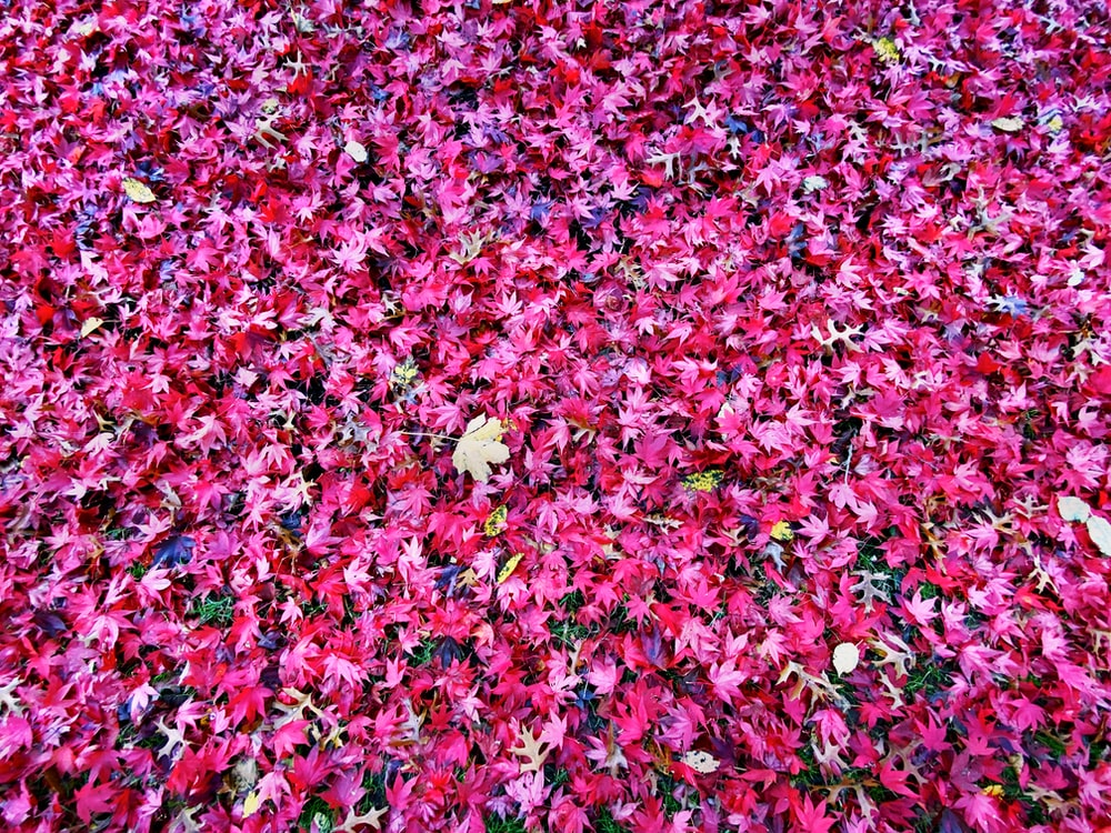 pink and white flowers on ground
