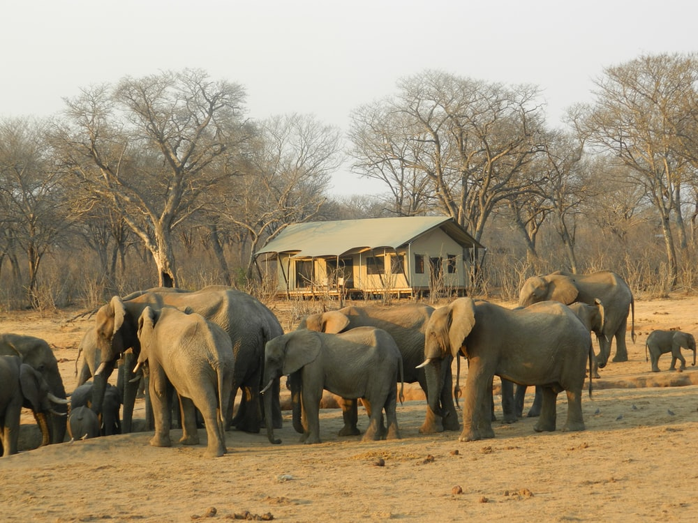 group of elephant walking on brown dirt during daytime