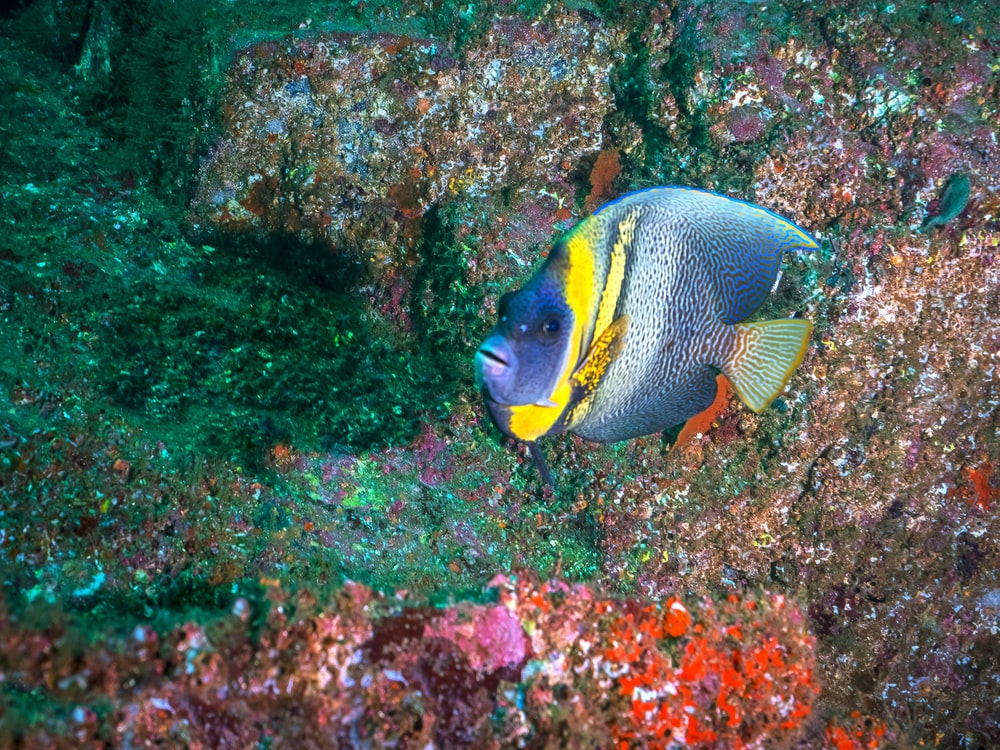yellow and gray fish on coral reef