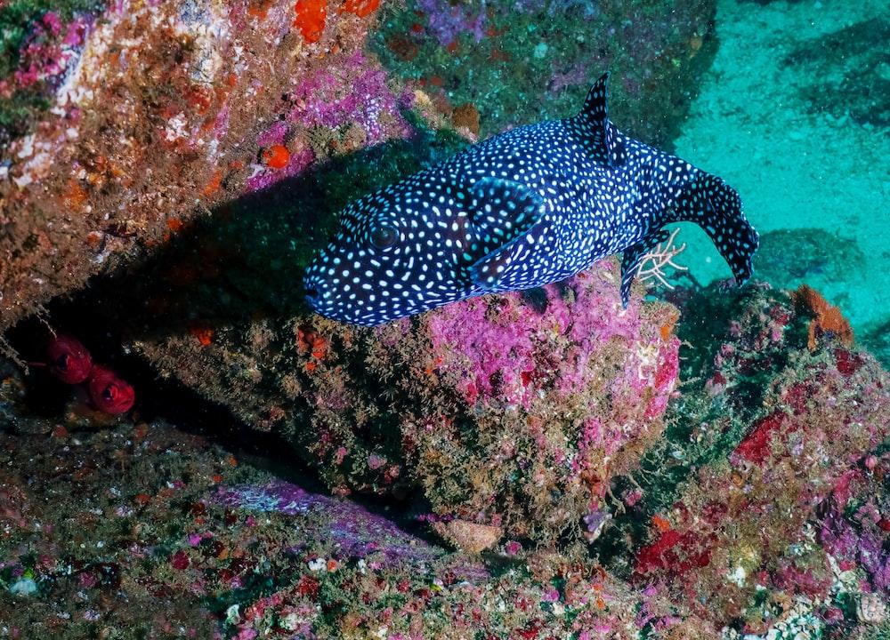 black and white polka dot fish