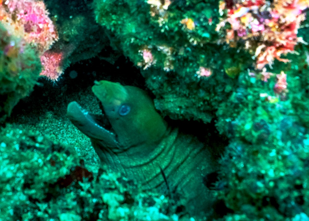blue and white fish on coral reef