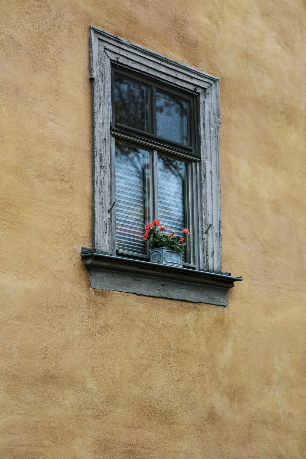 brown wooden window frame with red flowers