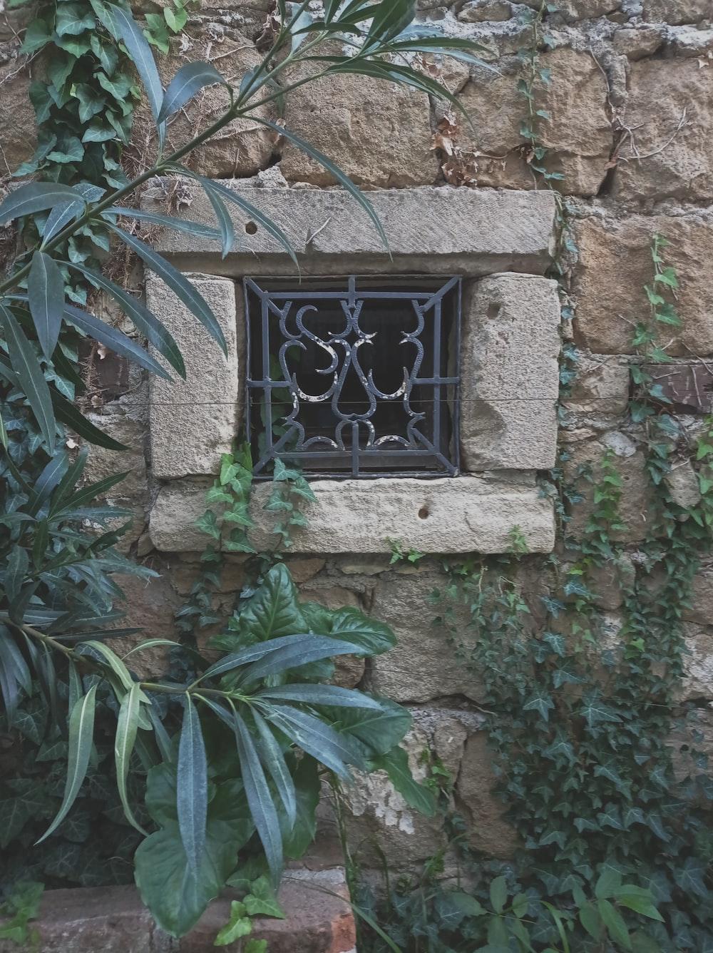 green leaf plant on window