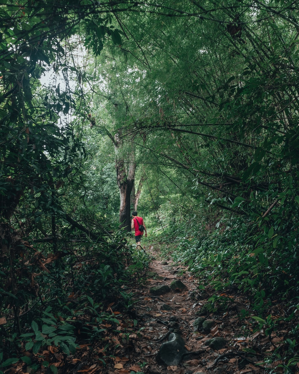 person in red jacket walking on dirt path between green trees during daytime