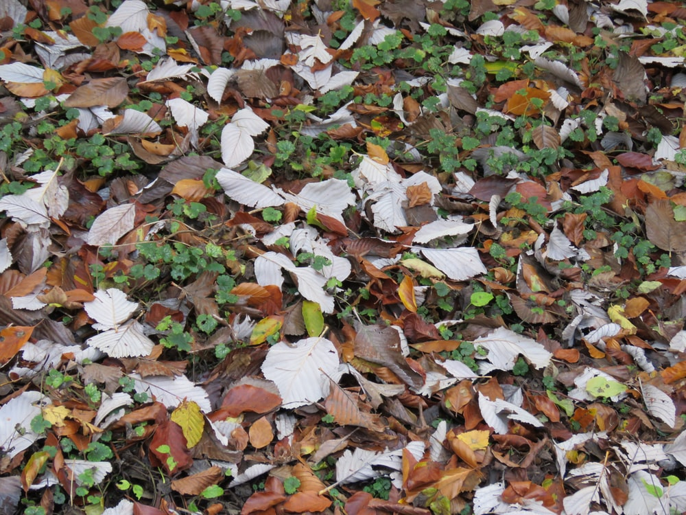 brown and white leaves on ground