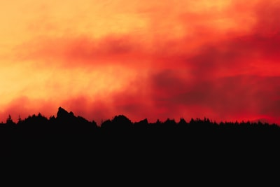 silhouette of trees during sunset pacific northwest zoom background