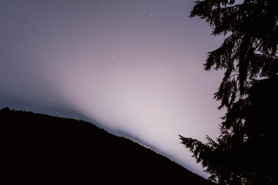 silhouette of trees during night time pacific northwest zoom background