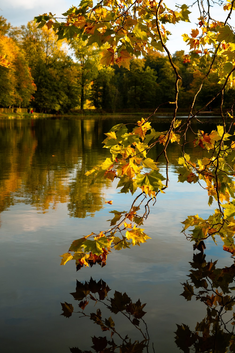 green and yellow leaves on body of water during daytime