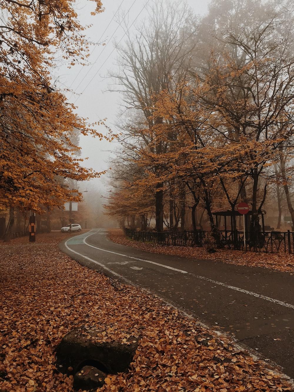 gray asphalt road between bare trees during daytime