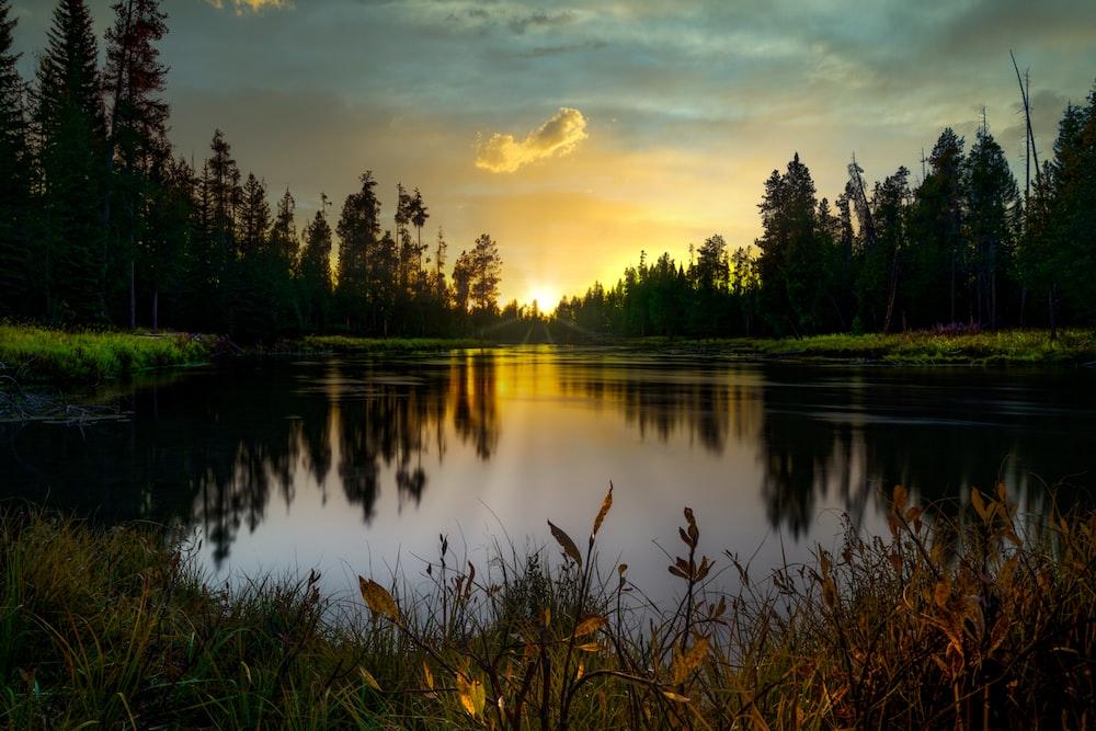 green trees beside lake during sunset