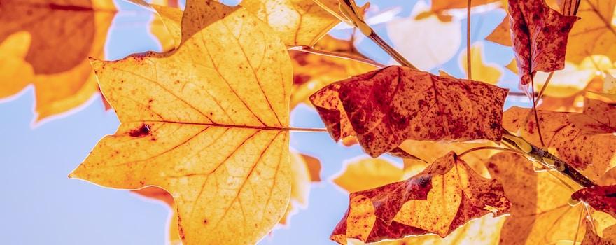brown maple leaf under blue sky during daytime