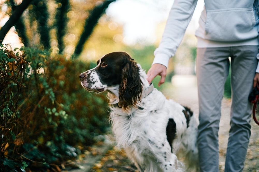 white and brown long coat medium dog