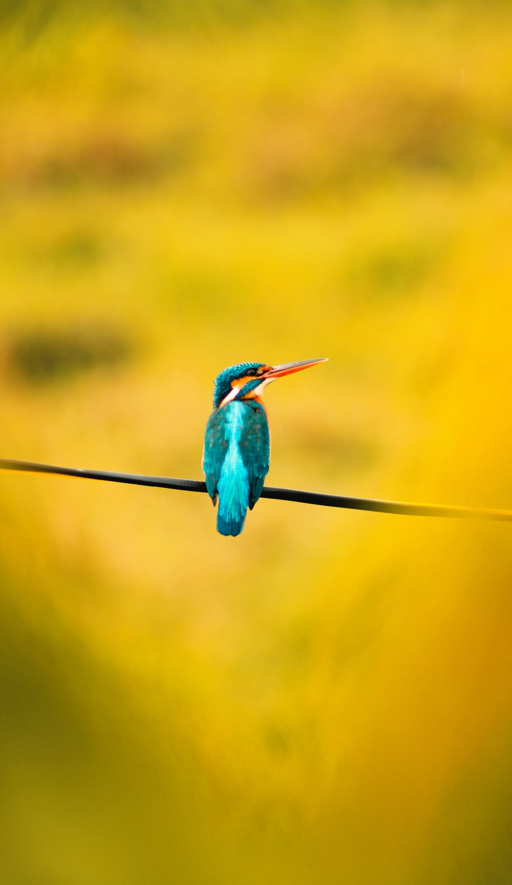 blue and green bird on black wire
