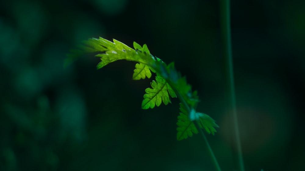green leaf in macro lens