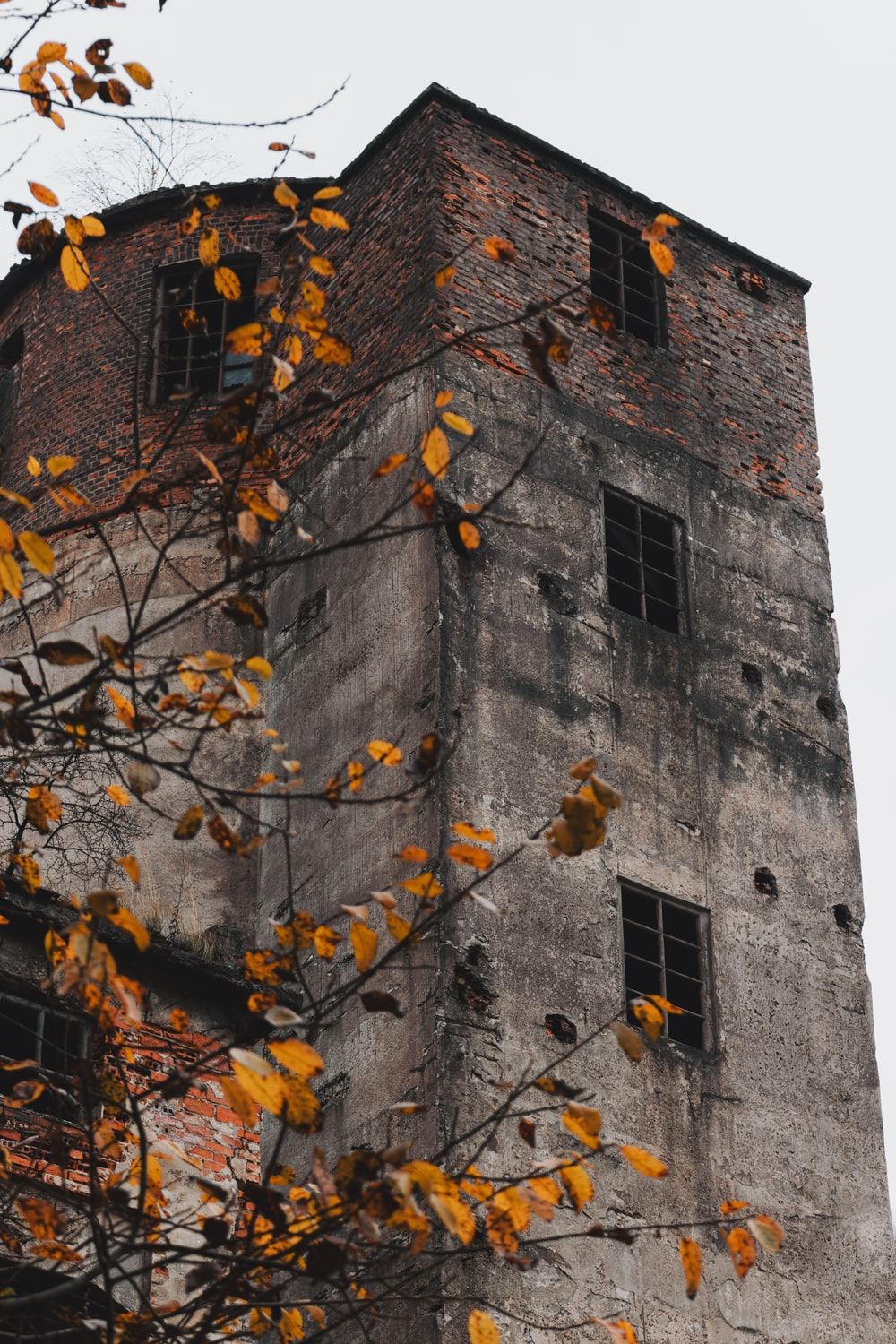 brown tree with yellow leaves near gray concrete building