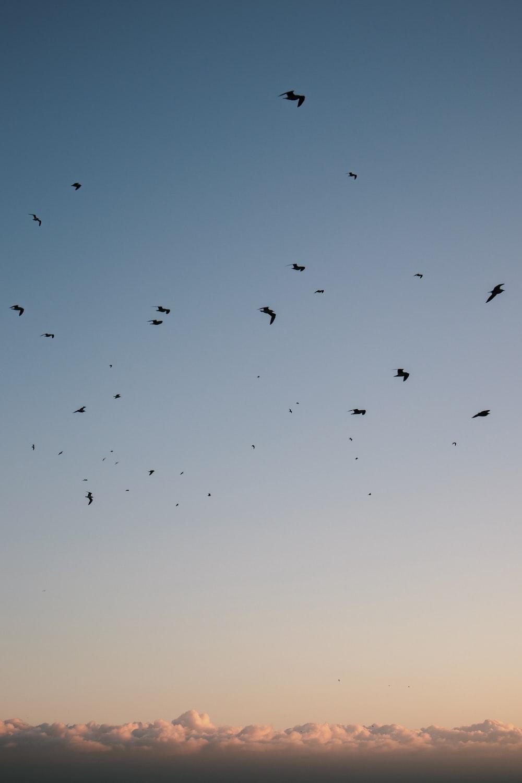 flock of birds flying during daytime