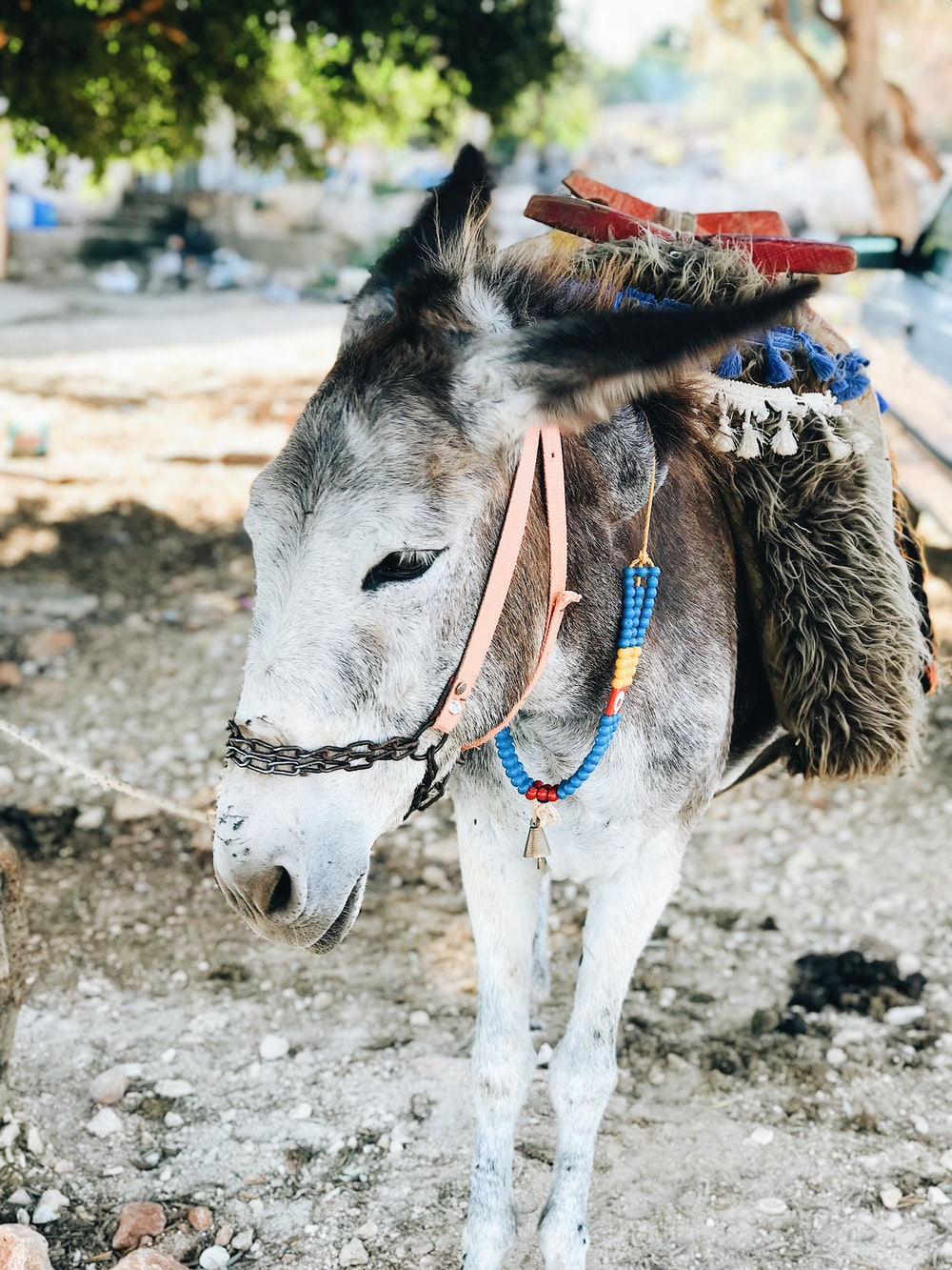 white and brown horse with red and blue scarf on head