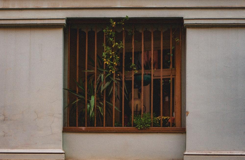 green plant in front of brown wooden door