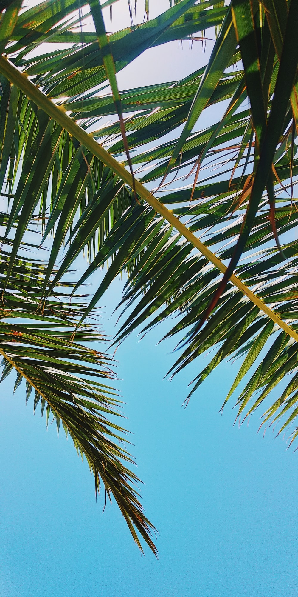 green palm tree under blue sky during daytime