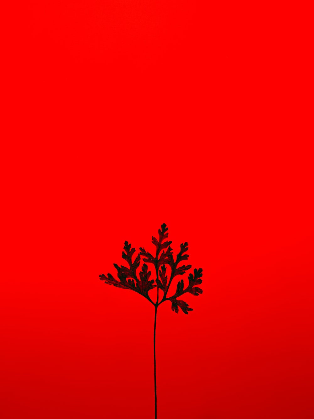 red and black tree with red background