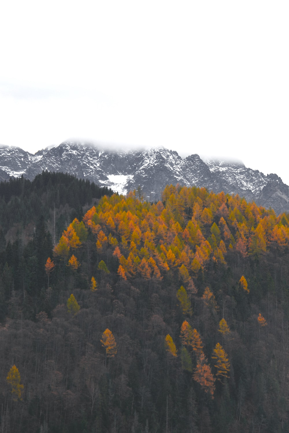 yellow and green trees near mountain during daytime