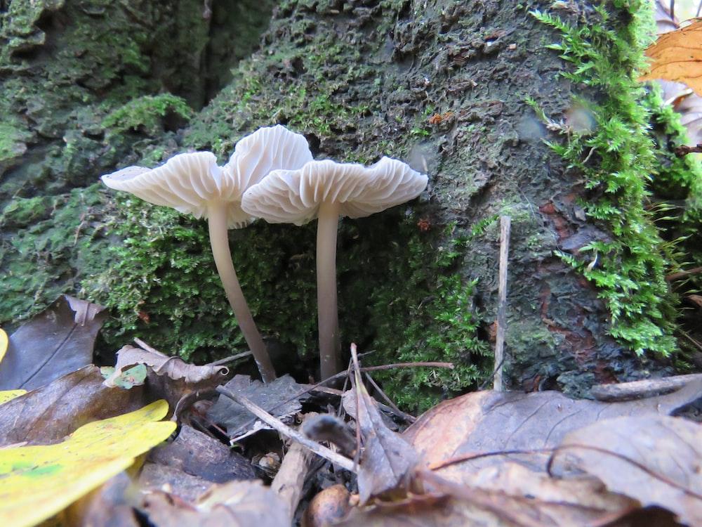 white mushroom on brown soil