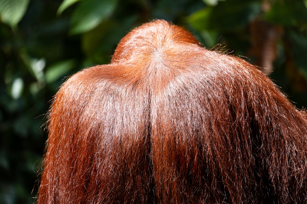 brown hair near green leaves
