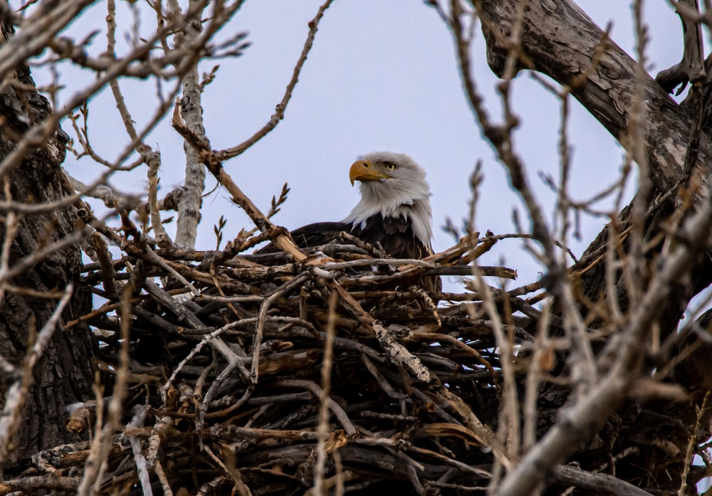 bald eagle on brown tree branch during daytime