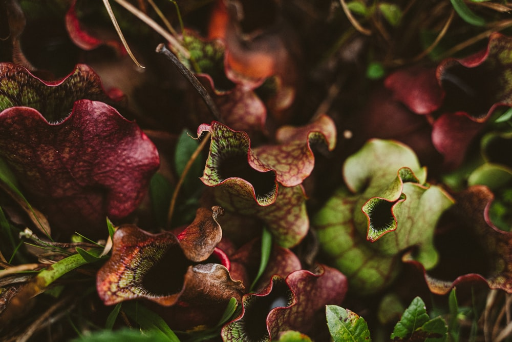 brown and green plant in close up photography