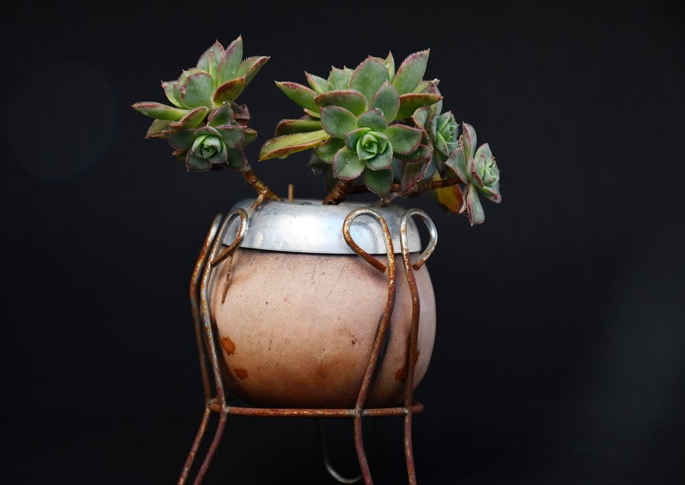 green succulent plant in brown pot
