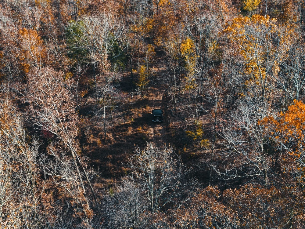 brown trees on brown field during daytime