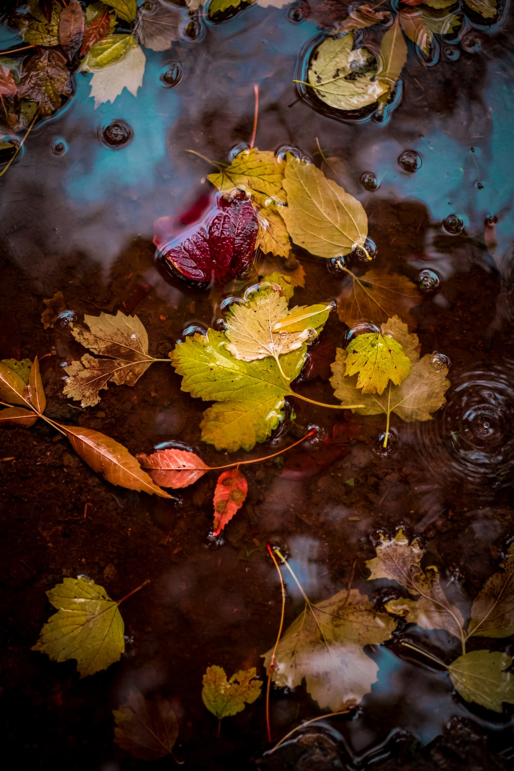 yellow and red leaves on water