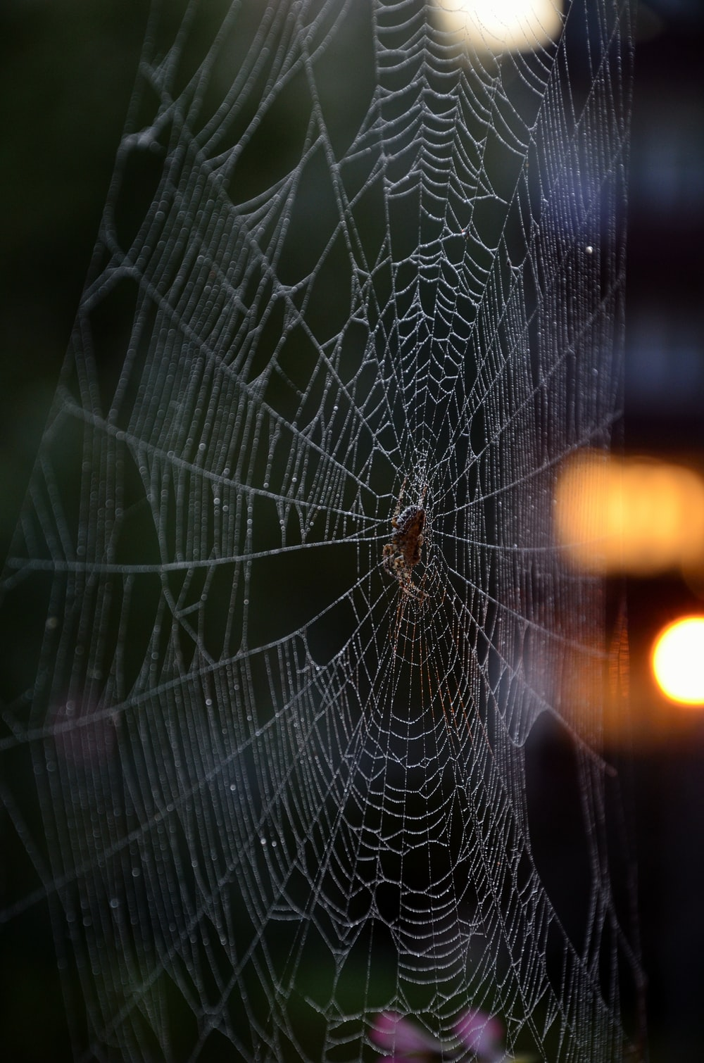 spider web in close up photography during daytime