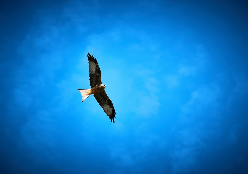 brown and white bird flying under blue sky during daytime