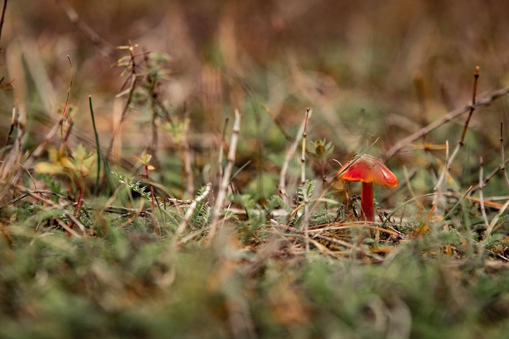 red mushroom on green grass during daytime