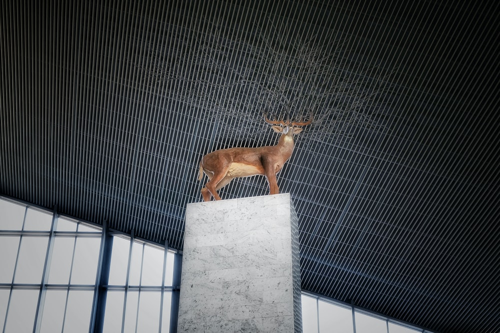 brown short coated dog on gray concrete wall