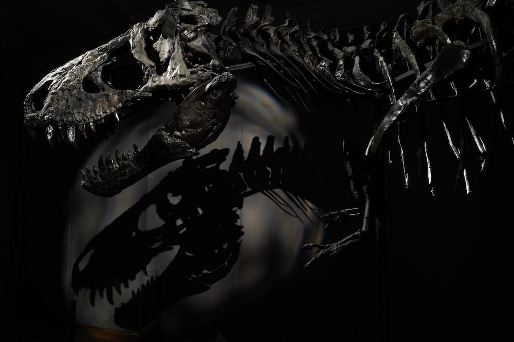 black and white dragon illustration