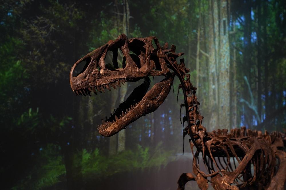 brown animal skull on tree branch