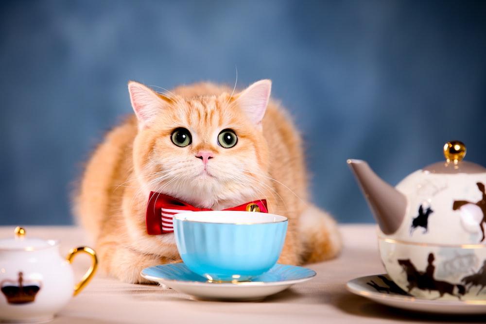 orange tabby cat on white ceramic bowl