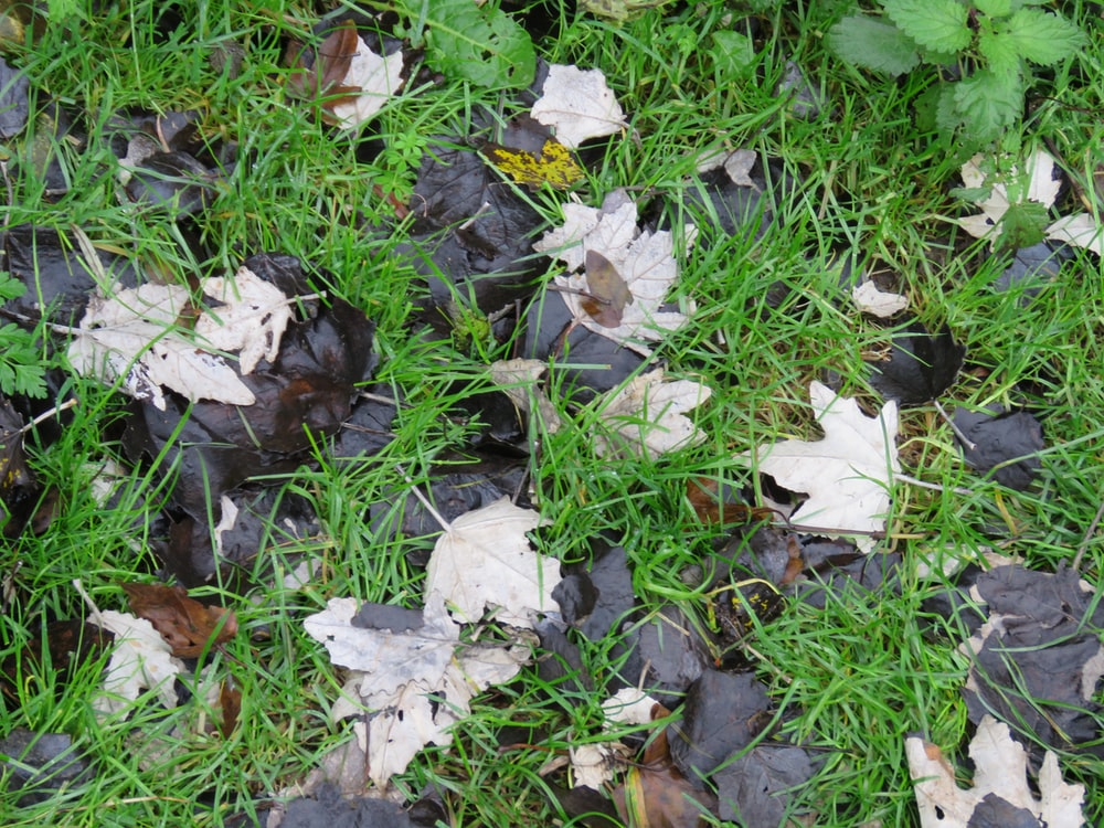 white and green leaves on ground